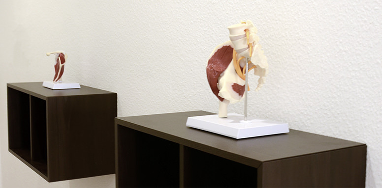 Anatomische Modelle in der Chiropraxis